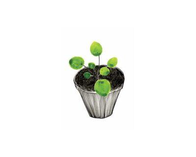 Pilea Plant Ansichtkaart B-Keuze